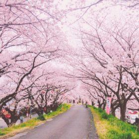春分の桜並木